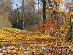 Bad Hall - Upper Austria (Been Around) Tags: park november parque autumn trees tree fall austria sterreich europa europe niceshot travellers laub herbst eu bume baum obersterreich autriche weg austrian aut herbstlaub o  upperaustria badhall kurpark 2011 5photosaday a hauteautriche concordians thisphotorocks visipix expressyourselfaward flickrunitedaward bauimage