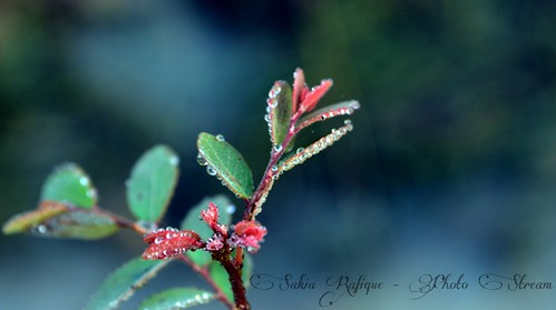 Perfection is the child of time.[Explored] (Sakia Rafique) plant green dew droplet explored nikond5100 sakiarafique