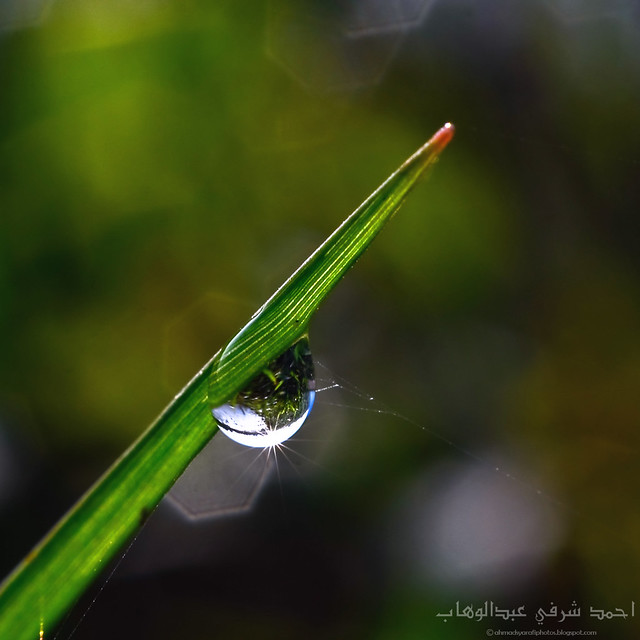 Through The Dew