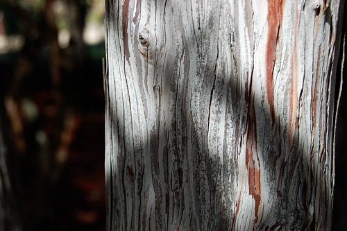 TreeBarkA