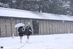 _MG_6021 (Kyoto Sanada) Tags: snow kyoto