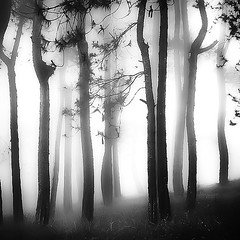 White Light (Hengki Koentjoro) Tags: mist fog surreal layers silhouette rain forest trees serene tranquil mystery