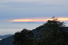 Sunrise in Fraser hill (Christophe Maerten) Tags: fauna landscape highlands flora cloudforest habitat landschap pitcherplant semar họ الجرة nevelwoud ấm 猪笼草 kandebærer dzbanecznik kantong nắp láčkovka kannrankesläktet หม้อข้าวหม้อแกงลิง непентес kannebærer kannetjesplant malaysiathailand2011 kannukasvit 벌레잡이통풀속 ąsotenis כדנית suibriğigiller கெண்டி தாவரம் నెపెంథిస్