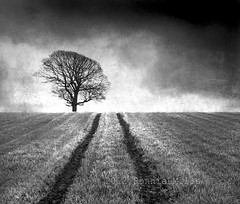 Quo Vadis (RonnieLMills) Tags: county ireland blackandwhite bw tree grass silhouette clouds dark mono nikon tracks down lone ie northern hilltop textured wow1 wow2 wow3 wow4 d90 killyleagh greatphotographers wow5 rockpaper naturepoetry absoluteblackandwhite tatot alwaysexc somethingspec artistictreasurechest mygearandmepremium mygearandmebronze mygearandmesilver mygearandmegold mygearandmeplatinum mygearandmediamond ringexcellence greaterphotographers dblringexcellence greatestphotographers rockpaperexcellence skancheli truthandillusion artcityart