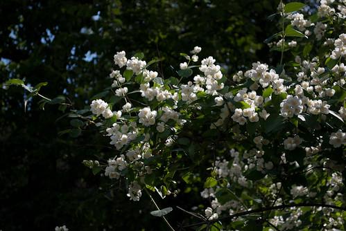 So many pretty little flowers!  DSC_4224