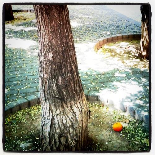 Trío de troncos... by rutroncal