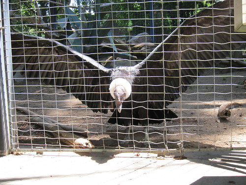 Zoo 7-3-2011