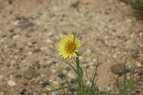 flower and gravel