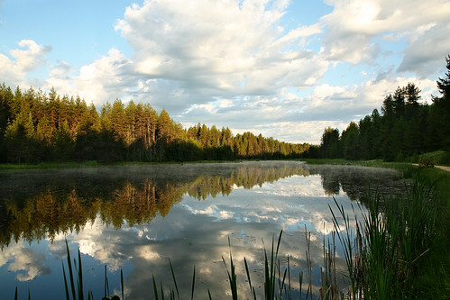 Moose Creek Mirror