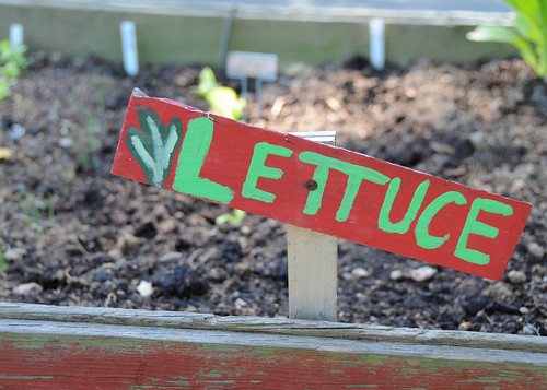 At T.C. Williams High School students learn green gardening methods USDA photo