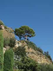 Lone tree, blue sky. (Christine Dolan) Tags: trees rural countryside september provence g11