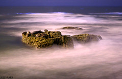 red tide (jessyparr) Tags: california longexposure nightphotography canon waves glow sandiego canon20d horizon lajolla seals openshutter redtide bluewaves