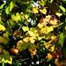 Las hojas_DSC0038