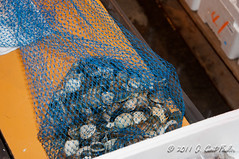 Bag 'o Clams (umijin) Tags: animal japan university events places clam fieldtrip kanagawa mollusca mollusk classes bivalve asari umuc  yokosukashi biol182 uoichibafishmarket cherryclam