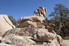 Tara Rocks (susan catherine) Tags: nationalpark rocks joshuatree