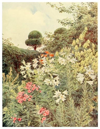 016-Lirios blancos y aconito amarillo-Some English gardens 1904- George S. Elgood