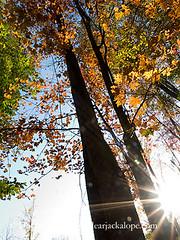 Autumn Sun Star (dorothylee) Tags: autumn color tree fall leaves landscape colorful lensflare sunburst starburst