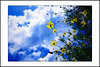 cosmos flower and clouds (e.nhan) Tags: light flower art nature yellow closeup butterfly landscape colours dof bokeh cosmos backlighting enhan