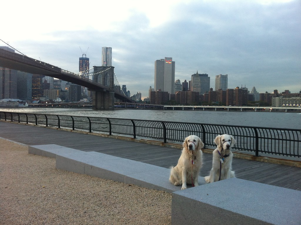Daily Brooklyn Bridge Dogs