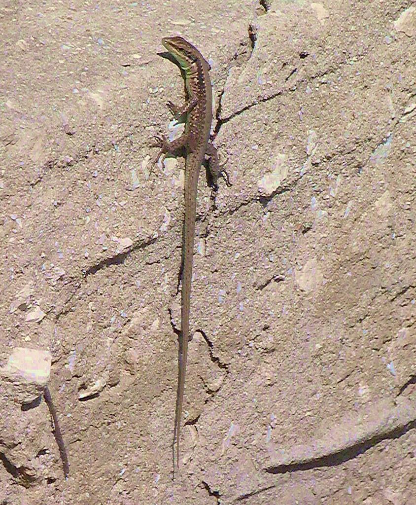27-10-2011-lizard