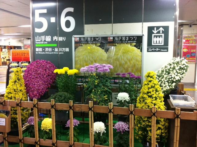 菊まつりの写真