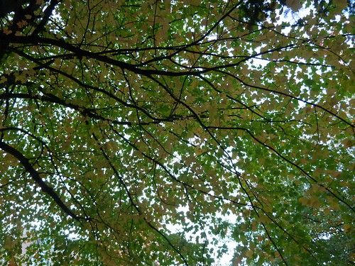 Leaves on the trees in the city