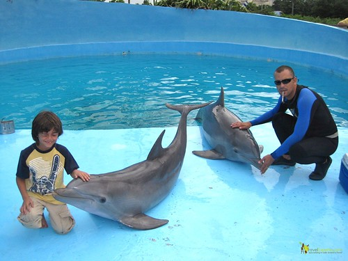 Dolphin Bonding at National Aquarium in Havana Cuba