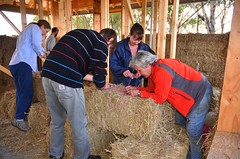 Jo, Tim, Lainie and Sue making half bales