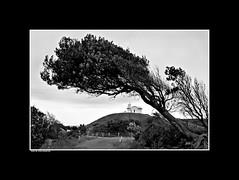 12. Under the Arch (InPort05) Tags: road lighthouse white black tree landscape australia maritime portmacquarie headland tackingpoint dennisgayaustraliaportmacquarieseascapewaterscapecoastapartmentproject