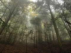 capogiro..... (g.fulvia) Tags: autumn trees fog alberi forest natura piemonte past nebbia autunno passato bosco paesi vallemaira borgate