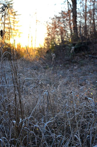 sunrise on frost_123