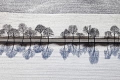 Fresh Snow (Aerial Photography) Tags: trees winter shadow white tree by landscape ed bayern mood linie row aerial line monochrom bume schatten baum deu luftbild alignment leaftree klte luftaufnahme obb weis deutschlandgermany reihe laubbaum deciduoustree foliagetree 24012009 fotoklausleidorfwwwleidorfde pastetten pastettenlkrerding 5d200202 vgpastetten hochberbayern2