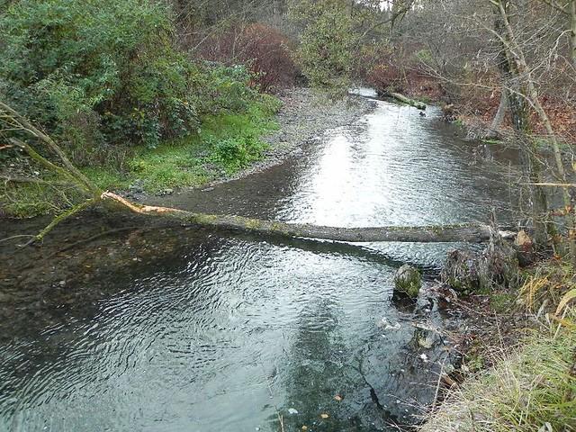 Un arbre abattu début novembre