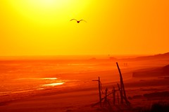 Hamptons shot with Nikon D5100 (Darren-) Tags: ocean november sunset sea usa newyork color beach water fun sand waves longisland westhampton ringexcellence blinkagain nikond5100