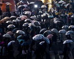 a Rainy Night (yskark) Tags: rain umbrella tokyo shibuya