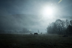 A Morning in Autumn (Inkming) Tags: horses sunlight mountain color fog montagne alpes soleil nikon numerique brume gilly albertville d90