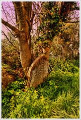 Returning season (Autumnsonata) Tags: old light nature beautiful beauty graveyard wales rural countryside cemetary memories scenic headstones scene graves churchyard ceredigion gravestones undergrowth penbryn