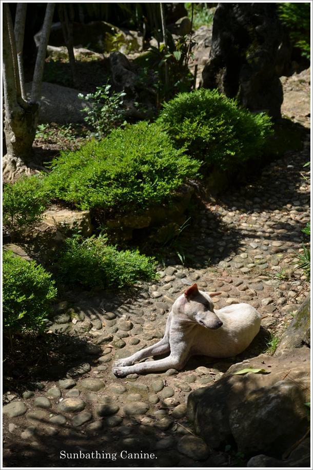 Sunbathing Canine