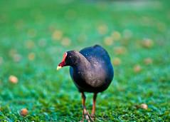 (Johnazza) Tags: bird botanical 85mmf14