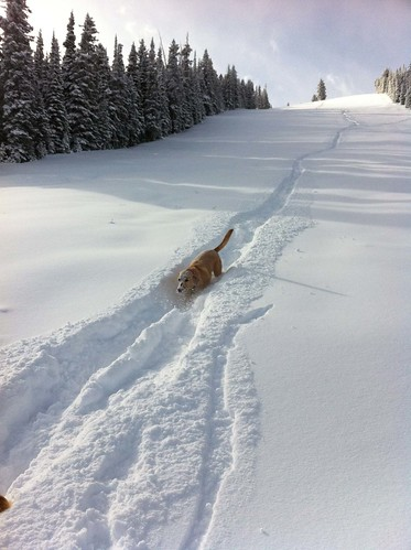 Snowmass Dog in Deep Snow Photo Courtesy Aspen Skiing Company and Matt Ross.