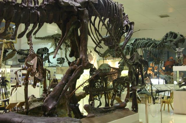 Dino Showroom