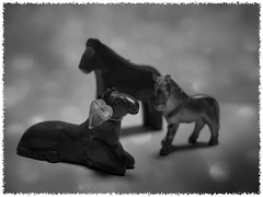 Day 323 (kostolany244) Tags: wood november horses texture monochrome metal stone germany europe bokeh figures day323 vogonpoetry geo:country=germany olympuse510 19112011 kostolany244 3652011 vogonpoetryappreciationclubphotograduates 365the2011edition monochrome2011