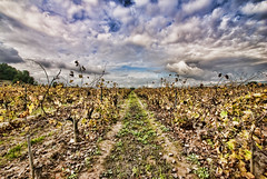 Cava is coming .../ Ya llega el cava... (pasotraspaso) Tags: autumn sky clouds nikon day cloudy vineyards cielo otoo cava codorniu viedos d80