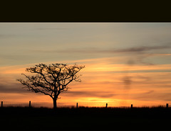 at the end of the day (ifido) Tags: sunset sky tree golden sundown antrim broughshane