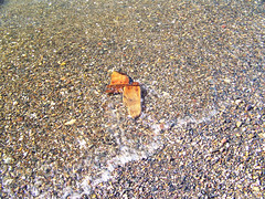2012 - 27.3.12 Prestwick (16) (marie137) Tags: houses sea people dog sun game beach water coffee animals shop landscape fun scotland sand ben shepherd pebbles german splash gsd marie137