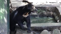 Malayan Sun Bear (ddsnet) Tags: animals zoo sony hsinchu taiwan    zoo  new nex   new hsinchuzoo mirrorless emount nex5 hsinchu newemountexperience experience
