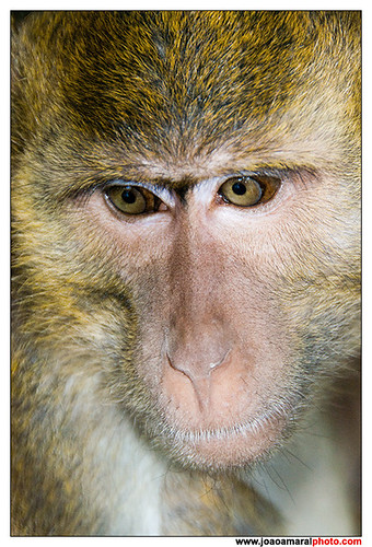 Monkey by joaoamaralphoto