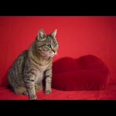 Cat Bouche ba bouche cat