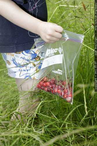 slowly adding cherries to the bag - MG 5130.JPG