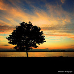 ~Loneliness adds beauty to life. It puts a special burn on sunsets and makes night air smell better~ Henry Rollins (Adettara Photography) Tags: sunset color tree silhouette clouds river landscape us dc washington alone potomac adettara artistoftheyearlevel3 artistoftheyearlevel4 musictomyeyeslevel1